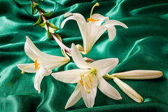 Flowers of a white lily close up. Large flowers of a white lily against green silk. Are presented by a close up Stock Photo