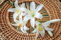 Flowers of a white lily close up. Large flowers of a white lily on an original wattled background. Are presented by a close up Royalty Free Stock Images