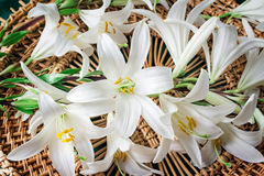 Flowers of a white lily close up. Large flowers of a white lily on an original wattled background. Are presented by a close up Stock Photo