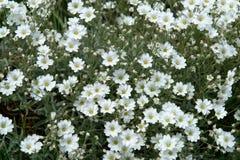 Flowers_0339 Stock Photos