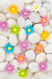 Flowers on white pebbles Royalty Free Stock Images