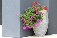 Flowers in white pot on render wall background. Colorful flowers in modern exterior of render wall Stock Image