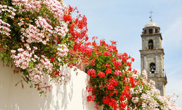 Flowers on the white streets Stock Photography