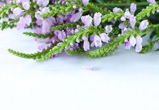 Flowers on a white surface Stock Photography