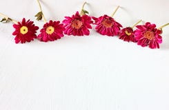 Flowers on white textured wood background Stock Image