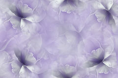 Flowers white-violet background . Purple-white large petals flowers tulip.  floral collage.  Flower composition. Stock Image