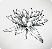 Flowers white water lily  hand drawing Royalty Free Stock Images