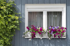 Flowers in white window Stock Image