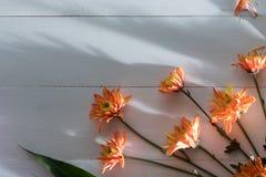 Flowers on white wood royalty free stock photo