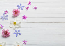 Flowers on white wooden background Royalty Free Stock Image
