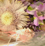 Flowers and white wrapping. Flowers in a bouquet close-up with white cellophane wrapping paper Royalty Free Stock Images
