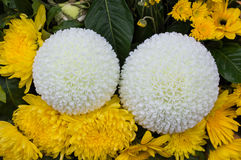 Flowers white yellow Stock Photo