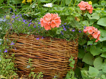 Flowers in a wicker basket Stock Image