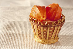 Flowers in a wicker basket still life. Flowers in a wicker basket on the table royalty free stock photography
