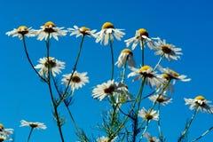 Flowers wild - 2 stock image