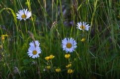 Flowers. Wild flowers in a field Stock Image