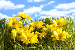 Flowers on a wild meadow Stock Photo