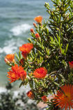 Flowers. Wild flowers on sea background Royalty Free Stock Photos