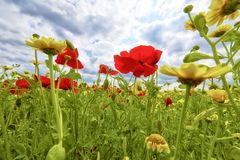 Flowers in a wild summer field Royalty Free Stock Images