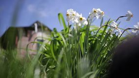 Flowers in the wind. Wind blows through the flowers in a countryside garden stock video footage