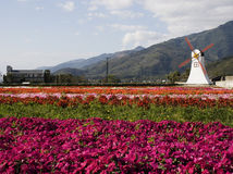 Flowers and windmill. Flower fields and a model windmill.  In a valley Stock Image
