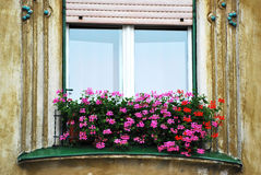 Flowers at window. Vintage window with white shutters and red flowers hdr Stock Images