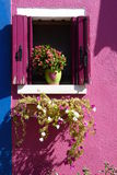 Flowers in a Window Royalty Free Stock Image