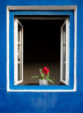 Flowers on a window Royalty Free Stock Photo
