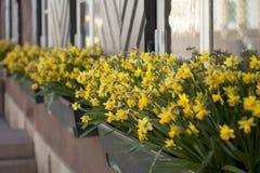Flowers on window board Stock Image