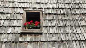 Flowers in window box in wood shingle roof Stock Image