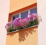 Flowers at window Stock Photos