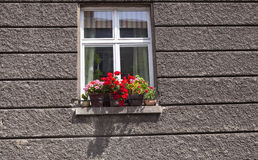 Flowers on the window. On the colorless wall Stock Photo