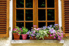 Flowers at a window Stock Image