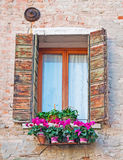 Flowers and window Royalty Free Stock Image