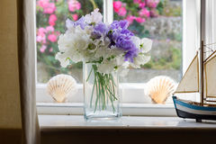 Flowers on window at home Stock Images
