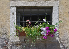 Flowers at the window with a lattice Royalty Free Stock Photos