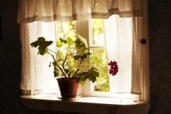Flowers on window pane Royalty Free Stock Photos