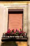Flowers and window with shutter Royalty Free Stock Images