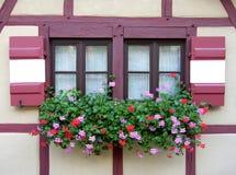 Flowers at windows royalty free illustration