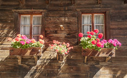 Flowers in the windows. Facade of a wooden house in Switzerland, with flowers in the two windows on a sunny day Royalty Free Stock Photos