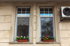 Flowers on windows Royalty Free Stock Photo