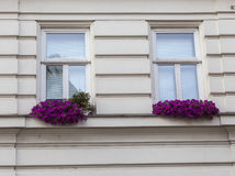 Flowers on the windows Royalty Free Stock Image