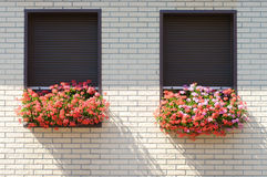 Flowers on the windowsill. Stock Photos