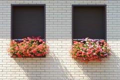 Flowers on the windowsill. Closing the jalousie on the windows Stock Photos