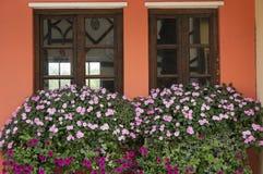 Flowers on windowsill Stock Photography