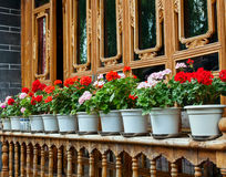 Flowers on the windowsill. Blooming flowers on the window sill in a row it looks very beautiful. n Royalty Free Stock Images