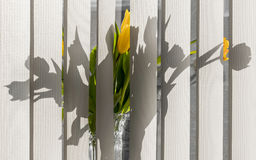 Flowers on the windowsill Stock Photography