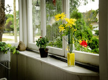 Flowers on Windowsill. A vase of flowers on a windowsill in an enclosed sun porch stock photos