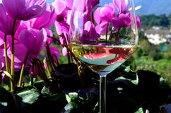 Flowers and wine Royalty Free Stock Photography