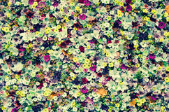 Flowers wintage effect Stock Photography